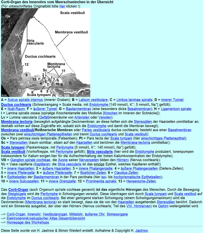 Groß Anatomie Und Physiologie 11. Auflage Fotos - Menschliche ...
