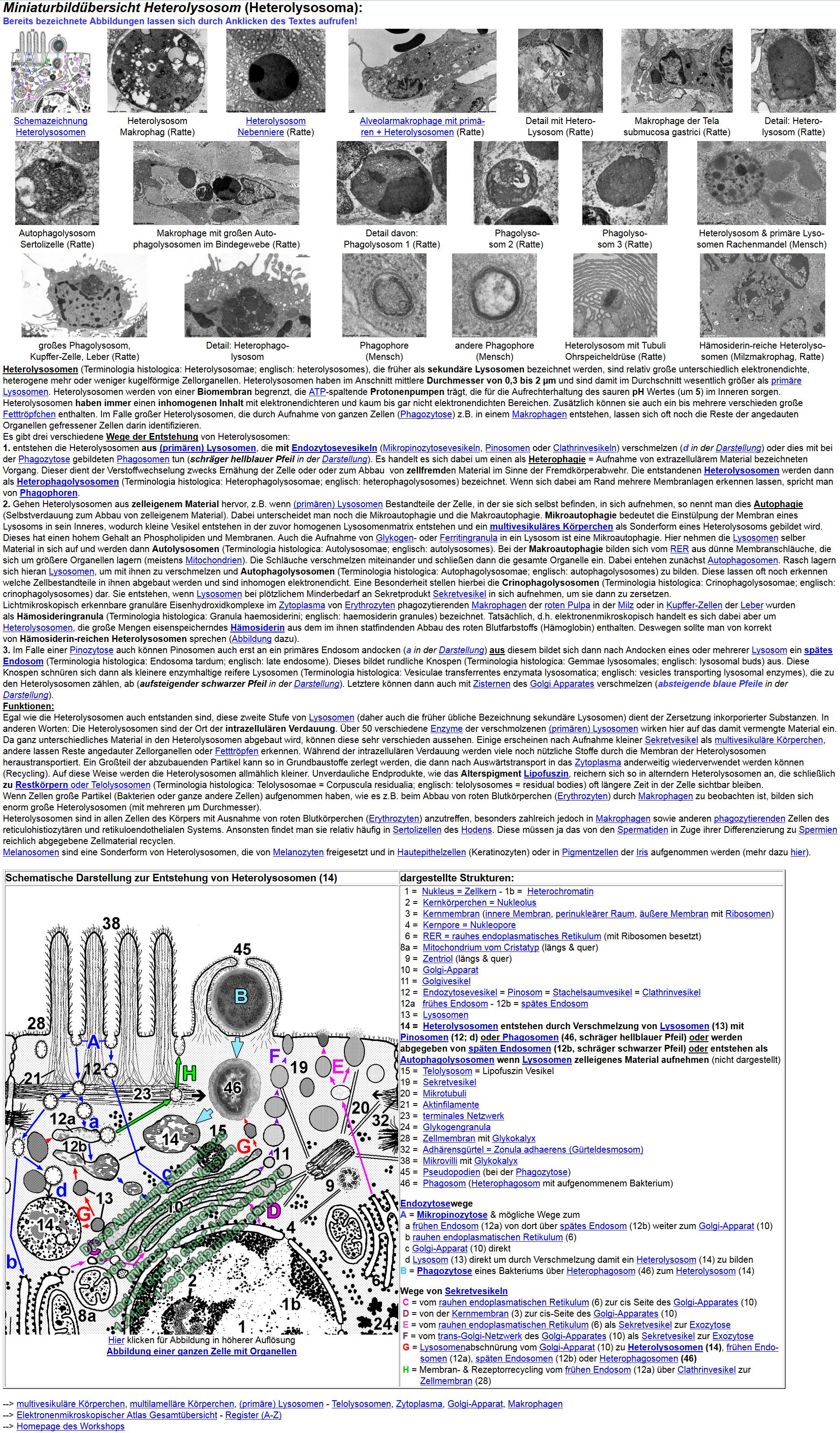 Elektronenmikroskopischer Atlas professionelle Version