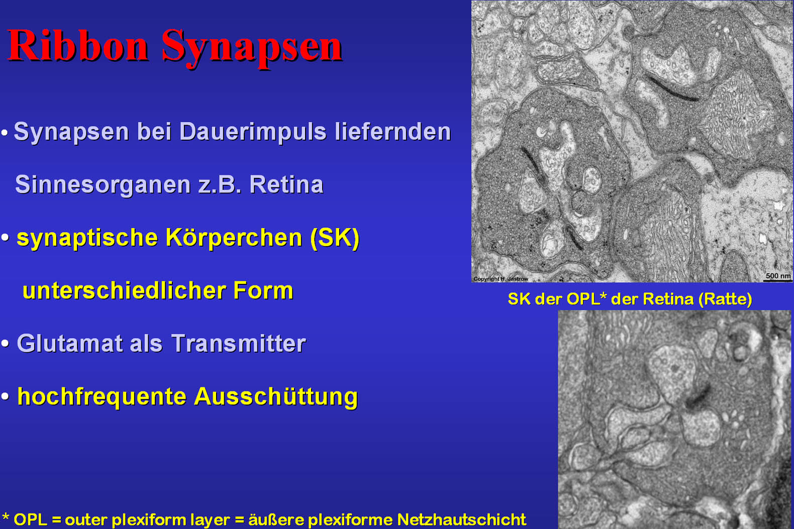 3D-Rekonstruktion synaptischer Körperchen der Retina