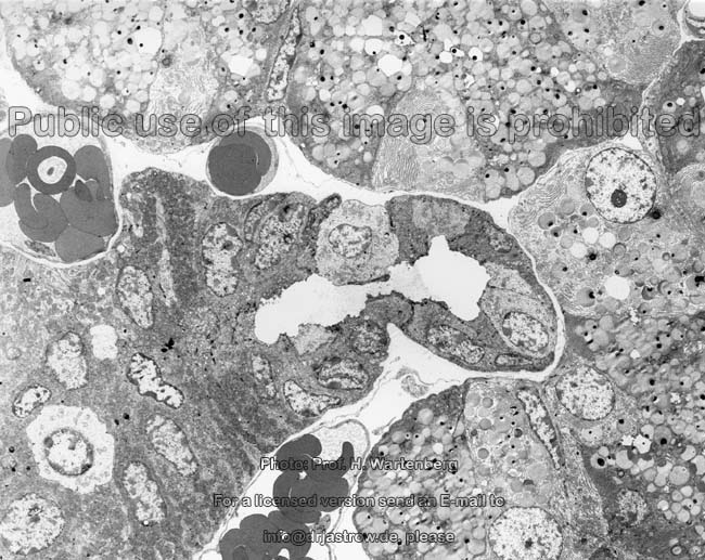 structure of salivary glands pdf
