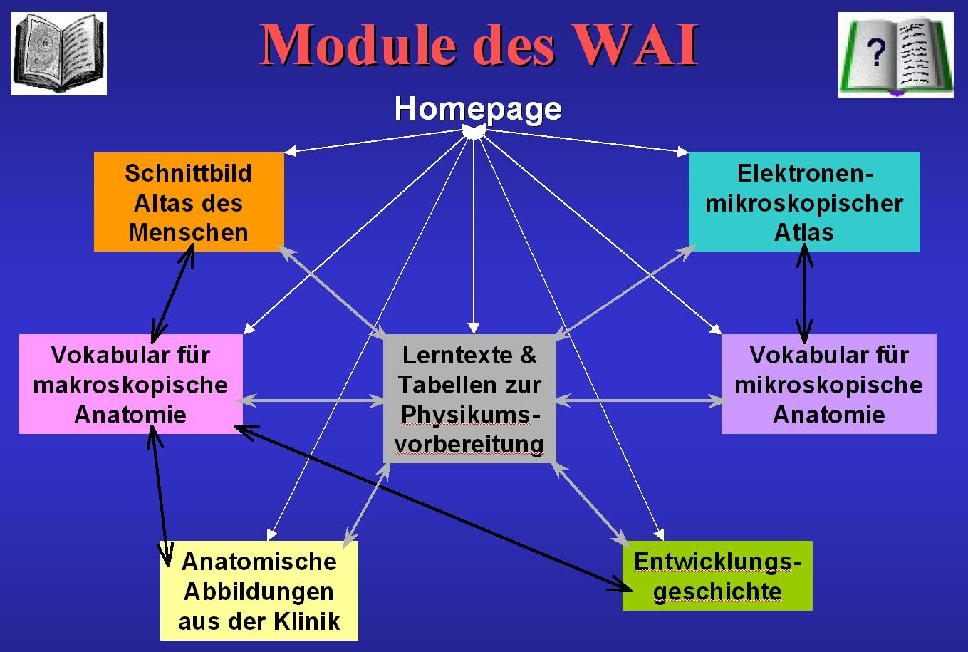 Projektbeschreibung Workshop Anatomie fürs Internet